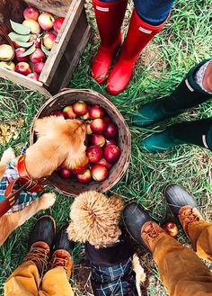 Autumnal goals! Get your wellies out and get your fruit picking baskets ready as the leaves are falling and apples need to be picked!
