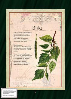 Birke - Birkenblättertee