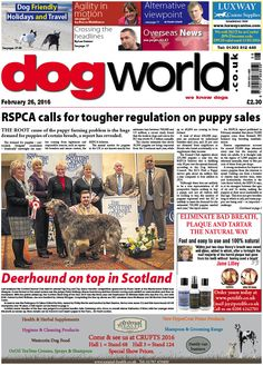 This week's Dog World #newspaper #dogs #dogshows #dogshowing #February26 #2016 #news