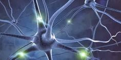 Η ΛΙΣΤΑ ΜΟΥ: Δείτε πώς σχηματίζεται μια ανάμνηση στον εγκέφαλο