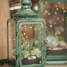 Magic Succulent Lantern House + Home Tips West Coast Gardens is part of Planting succulents - There's magic in the air on summer evenings, and these succulent lanterns add the perfect mood This DIY video shows you how to create the look Cacti And Succulents, Planting Succulents, Planting Flowers, Succulent Terrarium Diy, Succulent Ideas, Garden Terrarium, Succulent Containers Ideas, Indoor Succulent Garden, Succulent Table Decor