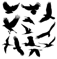 Black Birds This goes along with the Bird Cage idea for Halloween Birds Decor