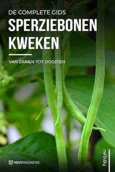 Fruit Garden, Vegetable Garden, Garden Plants, Balcony Gardening, Growing Veggies, Fruits And Vegetables, Green Beans, Lush, The Help