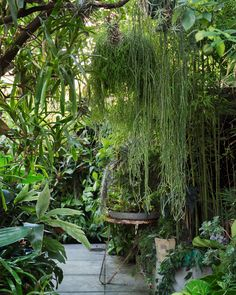 Greening your space: Plant trends and tips