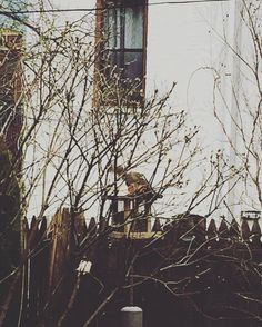 The saga of the squirrel vs. bird feeder continues this morning. #1 brought a friend so now there's two. The cardinal is sitting by on the fence waiting patiently. Nature in brooklyn. Very exciting.