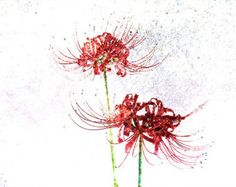 Spider Lilies Abstract Photography Art Print