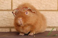 Professor Piggy is happy to settle all intellectual disputes, he merely asks for a baby carrot or two in return :)