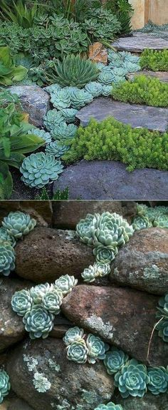 20 Ideas for Creating Amazing Garden Succulent Landscapes #outdoorgarden #landscapedesigner