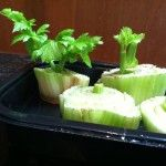 Growing celery in water