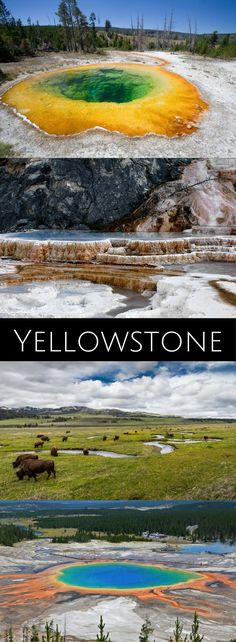 The Ultimate Guide to Exploring Yellowstone National Park Oh The Places You'll Go, Cool Places To Visit, Places To Travel, Travel Pics, Travel Ideas, Yellowstone Nationalpark, Yellowstone Park, National Park Tours, Us National Parks