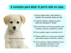 6 consejos para dejar a tu perro solito en casa