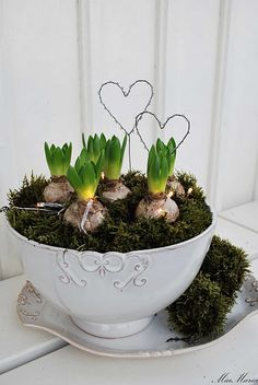 Moss in a vintage bowl with spring bulbs and wire hearts! <3
