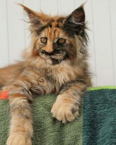 Not a cat person but this is a beautiful cat. RF