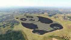 China flips the switch on world's first Panda Power Plant – Daily Pakistan