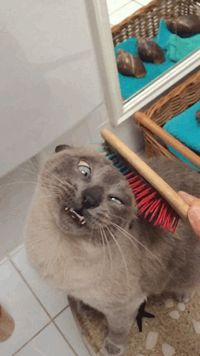 Ser gato écomo viver emumeterno fim desemana