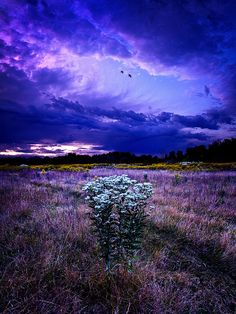 Twilight Bouquet  The Blue of the sky is just stunningly beautiful. LM