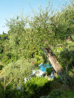 """Giardino di """"Hotel Splendito"""", Portofino Liguria Italia (Luglio)"""