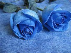 Tony Garal                   (Mis Poesias): POESÍA NÚM.0043.14 LINA VALDERRAMA.