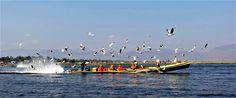 Lac inle bateaux de moines jetant du pain aux mouettes Myanmar 2014