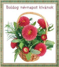 névnap, szöveges, képeslap, virágok, köszöntő, Aster Blume, Aster Flower, Gifs, Name Day, Beautiful Flowers, Floral Wreath, Birthday, Blog, Bouquets