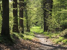 Forest_path_in_Yvelines_-_France.jpg 2,024×1,520 pixels