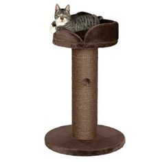 My cats love this one...need a second one!  Trixie Pepino Scratching Post in Chocolate Brown @Petco