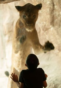 Photographer Armando Sierra captured the scene as his son Matthew walked up to the animal's enclosure at Zoo Miami in Florida, USA.