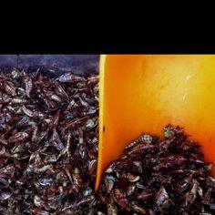 Ristede græshopper. Blev budt på marked i Mexico City.