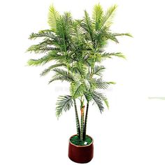 TCB-02 300CM Artificial Defiled kwai Palm Small Palm Trees, Small Palms, Cactus Plants, Cacti, Cactus