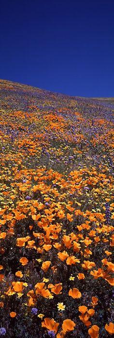 Rebirth . Tehachapi Mountains . California