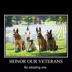Military working dogs:-)