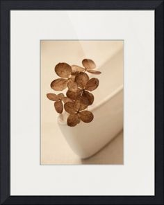 """""""Chocolate  Milk"""" by Priska Wettstein, Dawson City // Hydrangea blossoms, driedarranged on the edge of a white little bowl // Imagekind.com -- Buy stunning fine art prints, framed prints and canvas prints directly from independent working artists and photographers."""