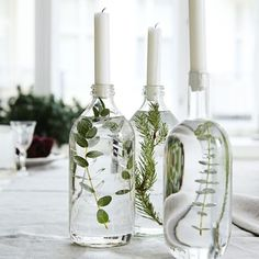 Handmade Home Decor Beautiful table decoration. Decorate glass bottles with aquatic plants. Easy Home Decor, Handmade Home Decor, Cheap Home Decor, Winter Home Decor, Nature Home Decor, Urban Home Decor, Recycled Home Decor, Classic Home Decor, Diy Home
