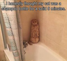 This is so cute/funny/got me thinking cats could be anywhere lol