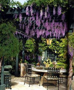 pergola-canopy-pergola-cover-pergola-sun-protection-pergola-plants-ideas-wisteria.jpg (600×737)