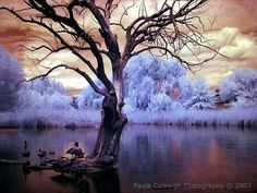 Infrared-photo04 in Beyond Visible: 100 Years Of Infrared Photographs