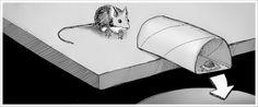 http://lifehacker.com/5451065/make-a-diy-no-kill-mousetrap-with-a-toilet-paper-roll