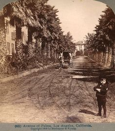 """Taken from a stereoview card of """"Avenue of Palms"""" circa 1898, which used to exist near Adams and Figueroa in what is sometimes referred to as General Longstreet's Palms.  Bizarre Los Angeles."""