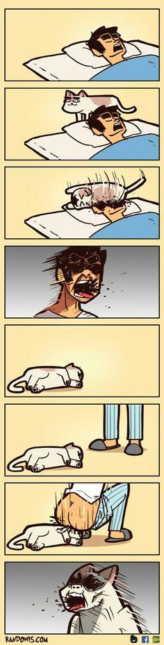 Revenge on cat. Good.