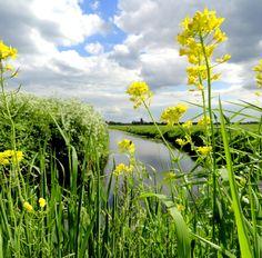 Waterland, polder landscape just north of Amsterdam by Jos Driessen