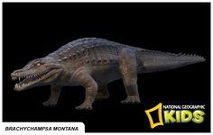Brachychampsa Montana Nat'l Geographic Info Cards