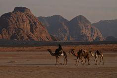 Camels in Wadi Rum, Jordan. This brings back lots of memories.