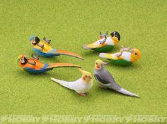 バードガーデン-鳥の庭-①