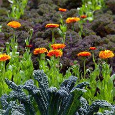 edible arrangements vs 1800flowers