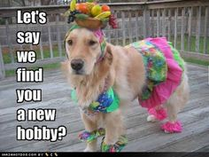 hilarious http://sulia.com/my_thoughts/17efe8fa-b7ac-4dd6-8e16-08a32894c8bb/?pinner=121634193