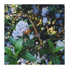 #abeille #bee #honeybee #nature #paris #leaf #flower #sunnyday #beauty #animal #meditation #mindfulness #namaste #peace #univer #universe