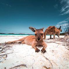 Lucky Bay - Western Australia