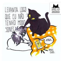 Livro que ilustra rotina de gatos destina lucro a projeto de adoção   Gatices - Folha de S.Paulo - Blogs