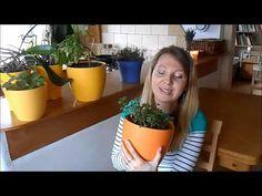 Pěstování bylinek ze semen - doma v květináči, na balkoně nebo na zahradě