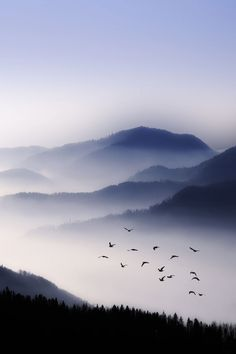Flight across the foggy mountains